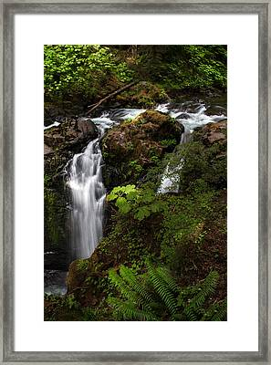 Olympic National Park Framed Print by Larry Marshall
