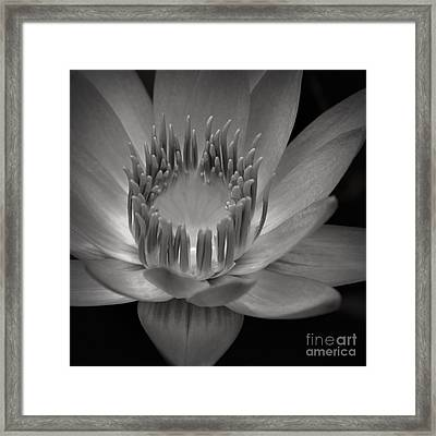 Om Mani Padme Hum Hail To The Jewel In The Lotus Framed Print by Sharon Mau