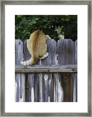Omg There Is A Dog Down There Framed Print by Diane Schuster