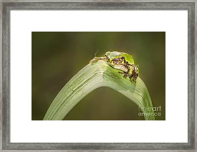 On A Leaf Framed Print by Timothy Hacker