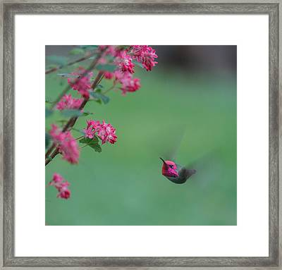 On A Mission Framed Print by Angie Vogel