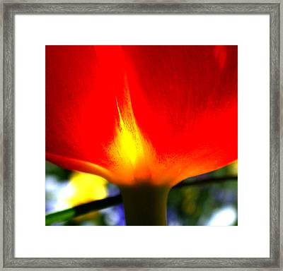 On Fire Framed Print by Rona Black