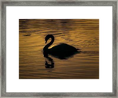 On Golden Pond Framed Print by Chris Fletcher