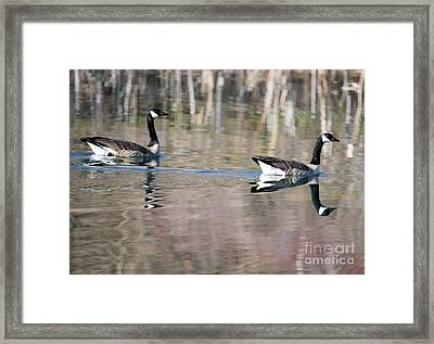 On Golden Pond Framed Print by Mike Dawson