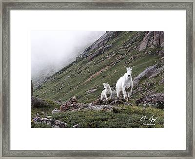 On Guard Framed Print by Aaron Spong
