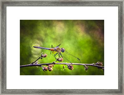 On Lookout Framed Print by Marvin Spates