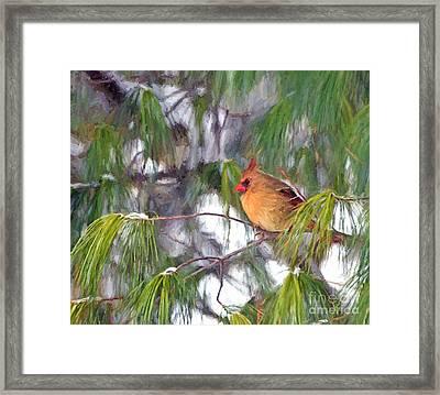 On Snowy Branches Framed Print by Kerri Farley