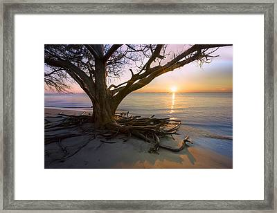 On The Edge Of The Surf Framed Print by Debra and Dave Vanderlaan