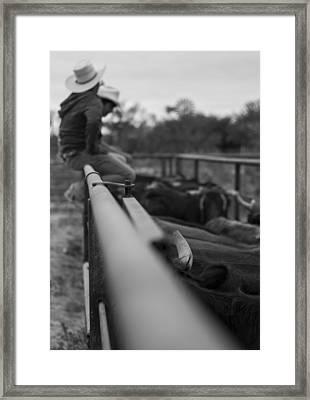On The Fence Framed Print by Amber Kresge