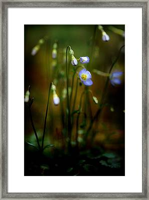 On The Forest Floor Framed Print by Michael Eingle