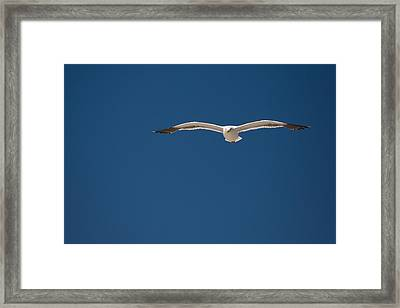 On The Hunt Framed Print by Mike Lee