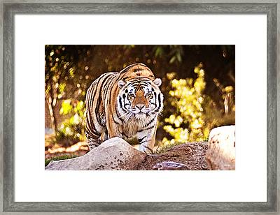 On The Prowl Framed Print by Scott Pellegrin