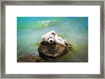 On The Rocks - Teddy Bear Art By William Patrick And Sharon Cummings Framed Print by Sharon Cummings