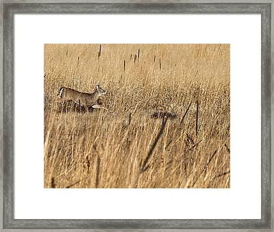 On The Run 2 Framed Print by Thomas Young