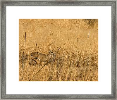 On The Run 3 Framed Print by Thomas Young