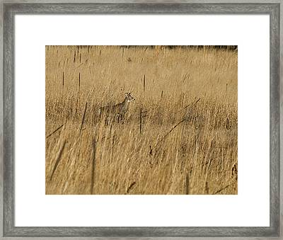 On The Run Framed Print by Thomas Young