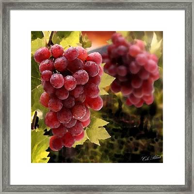 On The Vine Framed Print by Cole Black