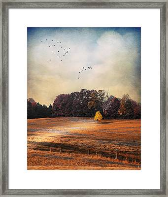 One And Only  Framed Print by Jai Johnson