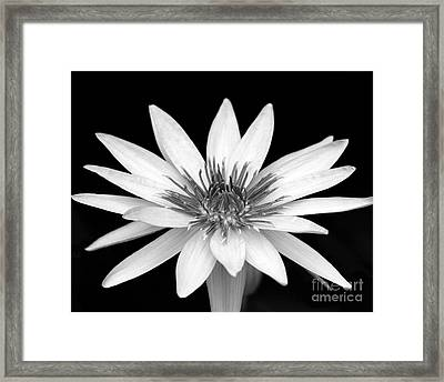 One Black And White Water Lily Framed Print by Sabrina L Ryan
