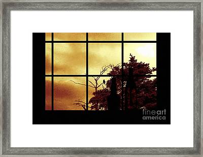 One Crow Outside My Window Framed Print by Barbara Griffin