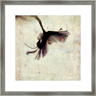 One Daisy - 992t2 Framed Print by Variance Collections