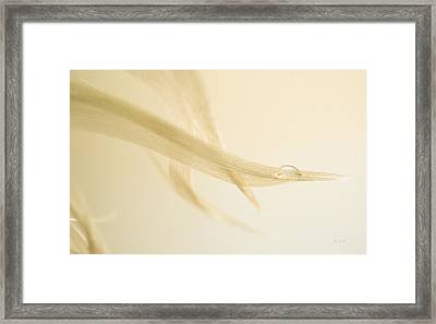 One Drop Of Water Framed Print by Bob Orsillo