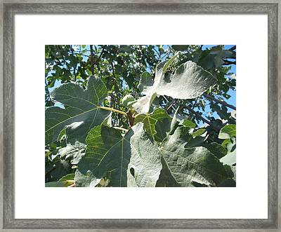 One Fantastic Fig Framed Print by Esther Newman-Cohen