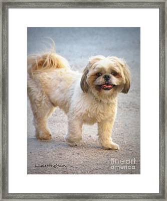 One Happy Little Dog Framed Print by Lainie Wrightson