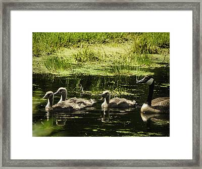 One Honk Says It All Framed Print by Thomas Young