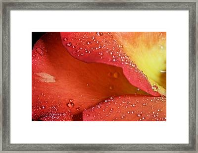 One In Ten Thousand  Framed Print by JC Findley