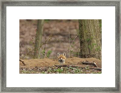 One Last Look Framed Print by Everet Regal