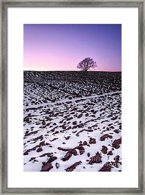 One More Tree Framed Print by John Farnan