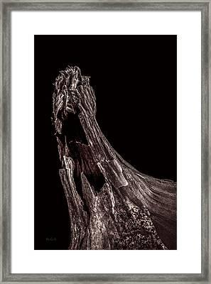 Onion Skin Two Framed Print by Bob Orsillo