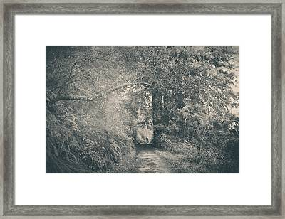 Only Peace Framed Print by Laurie Search