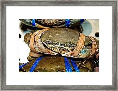 Ooh Crab Framed Print by Dean Harte