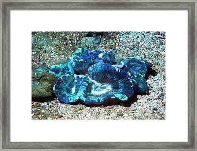 Open Brain Coral Framed Print by Georgette Douwma