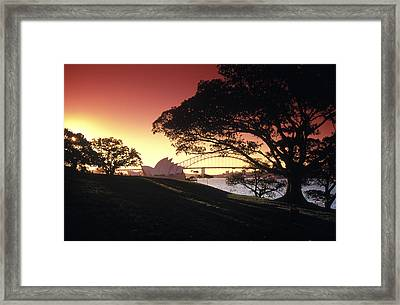 Opera Tree Framed Print by Sean Davey