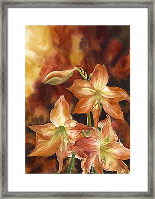 Orange Amaryllis Framed Print by Alfred Ng
