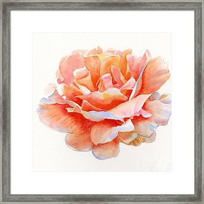 Orange And Gold Rose Square Design Framed Print by Sharon Freeman