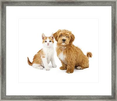Orange And White Puppy And Kitten Framed Print by Susan  Schmitz