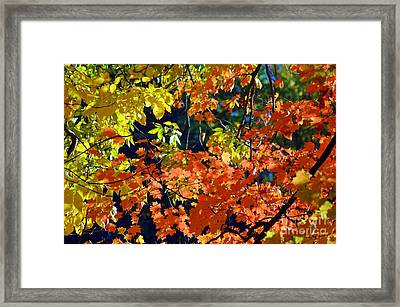 Orange And Yellow Framed Print by Kathleen Struckle