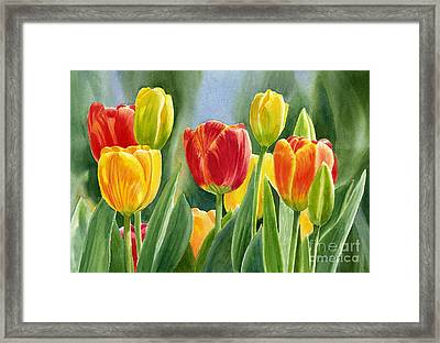 Orange And Yellow Tulips With Background Framed Print by Sharon Freeman