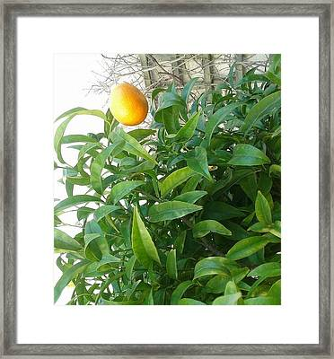Orange Framed Print by Andreea Alecu