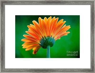 Orange Blast Framed Print by Lois Bryan