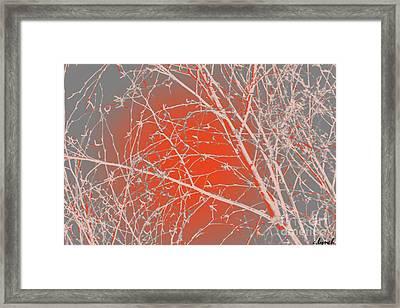 Orange Branches Framed Print by Carol Lynch