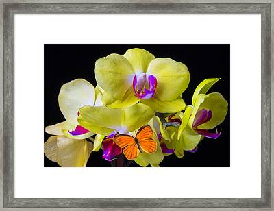 Orange Butterfly And Yellow Orchids Framed Print by Garry Gay