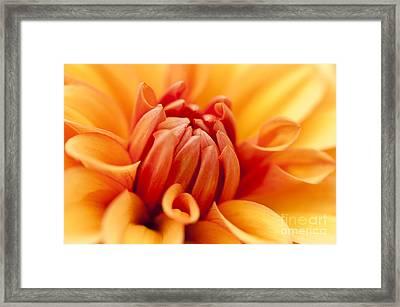 Orange Centre Framed Print by Anne Gilbert
