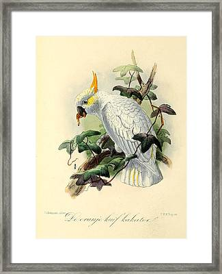 Orange Cockatoo Framed Print by J G Keulemans