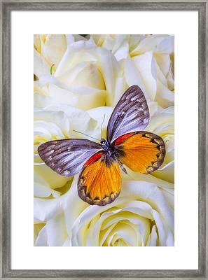 Orange Gray Butterfly Framed Print by Garry Gay