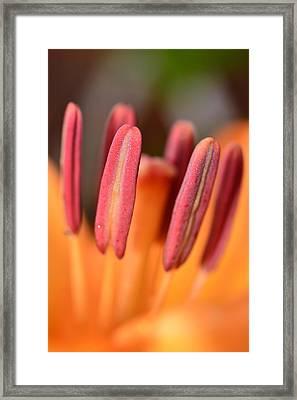 Orange Lilly Flower Framed Print by Toppart Sweden